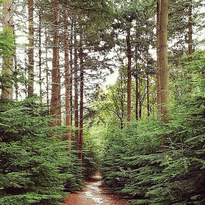 Wandelcoaching - Mirjam Karssen